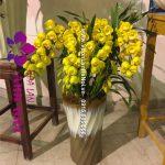 Chậu hoa địa lan Sato màu vàng mít