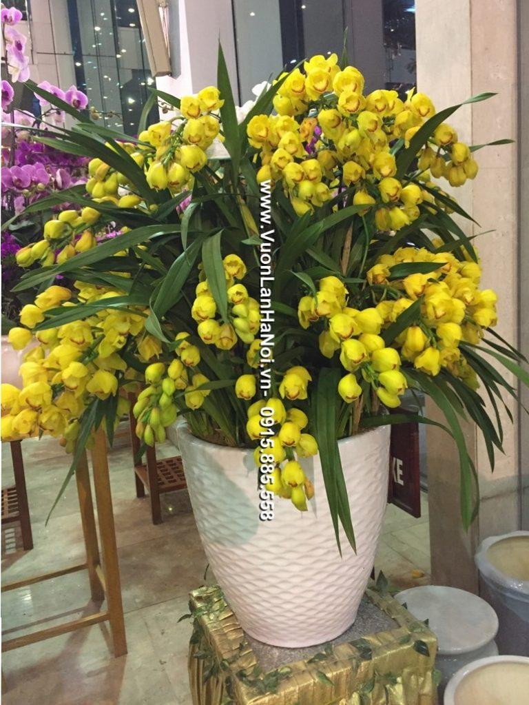 Chậu hoa địa lan Đà Lạt màu vàng mít