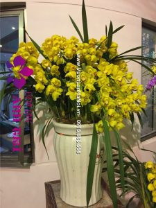 Chậu hoa địa lan Sato 30 cành