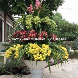 Chậu hoa địa lan đa sắc 4 tầng sự kiện