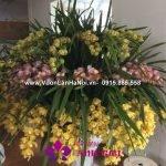 Chậu hoa địa lan đa sắc phòng hội nghị