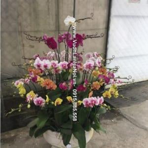 Chậu hoa lan hồ điệp đẹp tặng sếp