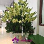 Chậu hoa lan Tết - Phát Tài Phát Lộc