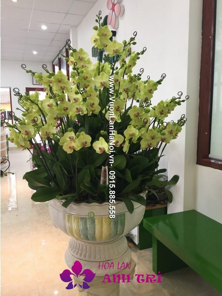 Hoa-lan-ho-diep-Anh-Tri (121)