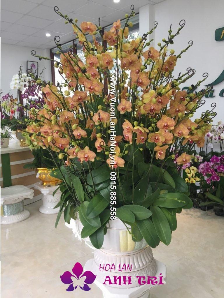 Chậu hoa lan màu cam đặt sảnh công ty