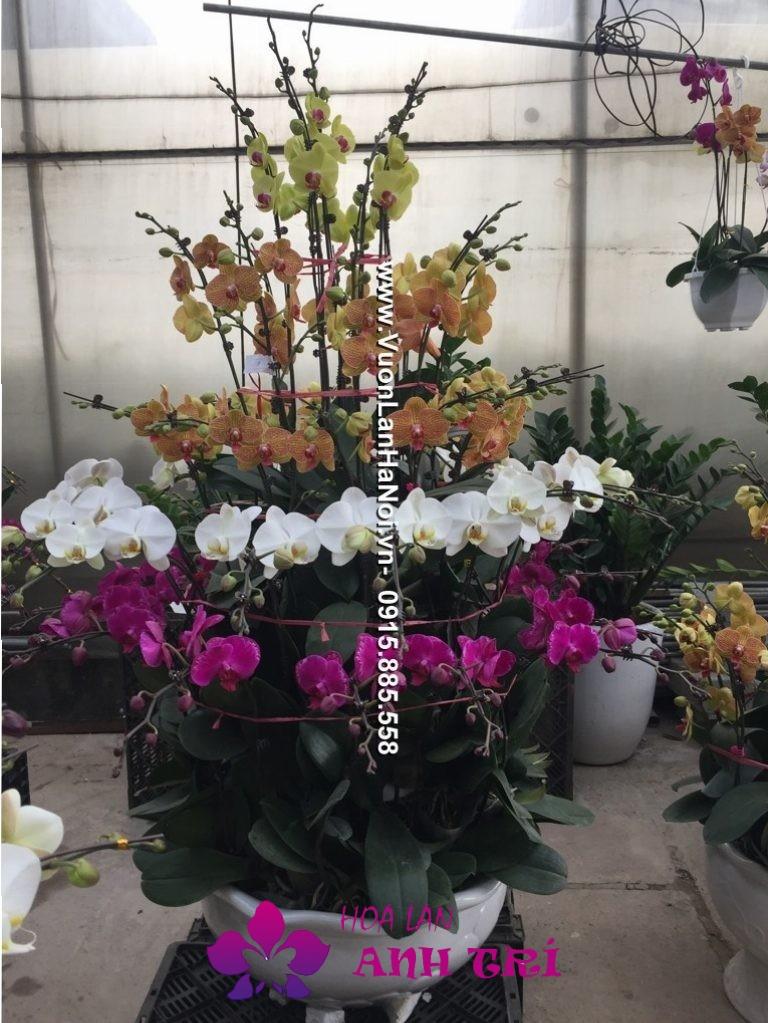 Chậu hoa lan hồ điệp đa sắc 5 tầng mới