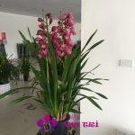 Chậu hoa Đà Lạt - Địa lan tím hột