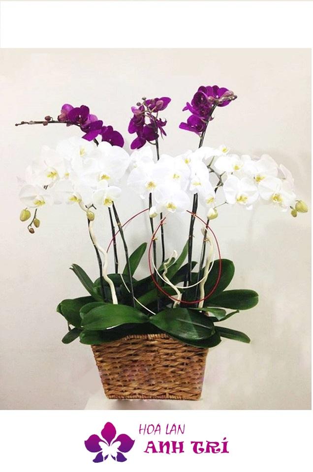 Giỏ hoa lan hồ điệp gửi lời cảm ơn
